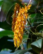Name gesucht/14375/orchidee-am-17112008-in-wilhelmastuttgart Orchidee am 17.11.2008 in Wilhelma/Stuttgart