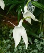 Name gesucht/22056/orchidee-am-03042009-in-stuttgartwilhelma Orchidee am 03.04.2009 in Stuttgart/Wilhelma