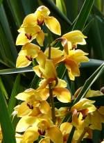 Name gesucht/22499/orchidee-am-03042009-in-stuttgartwilhelma Orchidee am 03.04.2009 in Stuttgart/Wilhelma