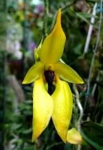 Name gesucht/3162/orchidee-am-07092008-in-wilhelmastuttgart Orchidee am 07.09.2008 in Wilhelma/Stuttgart