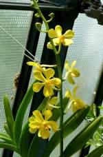 Name gesucht/3275/orchidee-am-23072008-in-wilhelmastuttgart Orchidee am 23.07.2008 in Wilhelma/Stuttgart