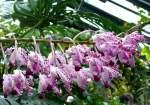 Name gesucht/4069/orchidee-am-18062008-in-stuttgartwilhelma Orchidee am 18.06.2008 in Stuttgart/Wilhelma