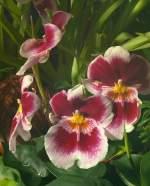 Name gesucht/64237/orchidee-am-27052009-in-wilhelmastuttgart Orchidee am 27.05.2009 in Wilhelma/Stuttgart
