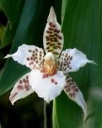 Name gesucht/7159/orchidee-am-24122008-in-wilhelmastuttgart Orchidee am 24.12.2008 in Wilhelma/Stuttgart
