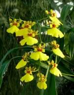 Name gesucht/7177/orchidee-am-24122008-in-wilhelmastuttgart Orchidee am 24.12.2008 in Wilhelma/Stuttgart