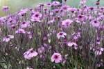 storchenschnabelgewachse/22861/storchenschnabel-geraniaceae-am-03042009-in-wilhelmastuttgart Storchenschnabel (Geraniaceae) am 03.04.2009 in Wilhelma/Stuttgart